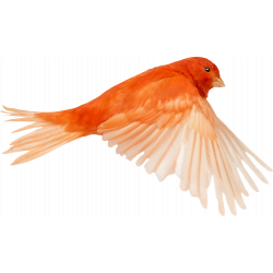 Autocollant Animaux Oiseau 1