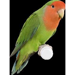Autocollant Animaux Oiseau 2