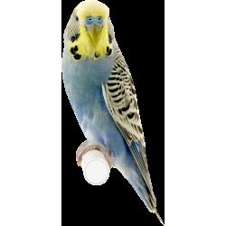 Autocollant Animaux Oiseau 4