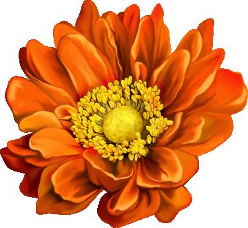 Autocollants Fleur Orange