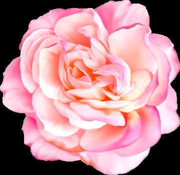 Autocollants Fleur Rose 1