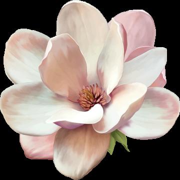 Autocollants Fleur Blanche
