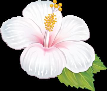 Autocollants Fleur Tropical 2