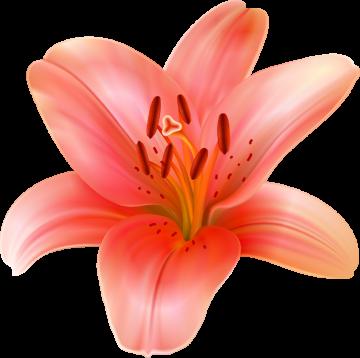 Autocollants Fleur Tropical 6