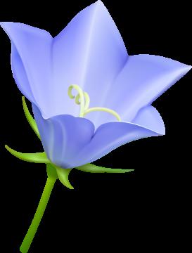 Autocollants Fleur Bleue
