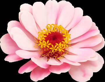 Autocollants Fleur Rose Pâle