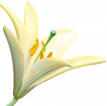 Autocollants Fleur Blanc