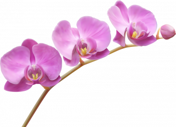 Autocollants Fleur Violette