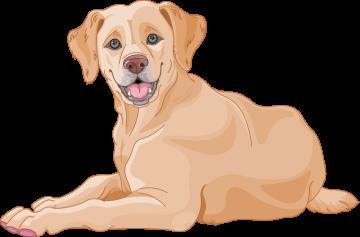 Autocollant Métier Santé Vétérinaire 1