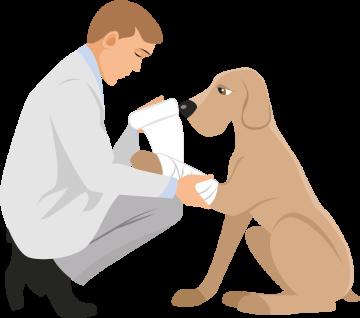 Autocollant Métier Santé Vétérinaire 2