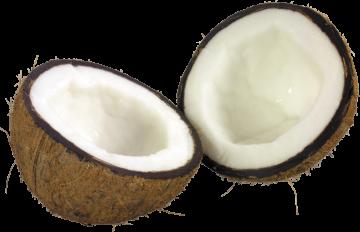Autocollant Alimentation Fruit Noix De Coco 2