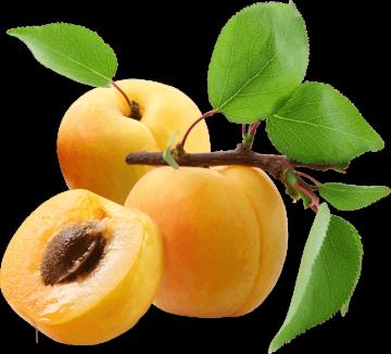 Autocollant Alimentation Fruit Abricot 1