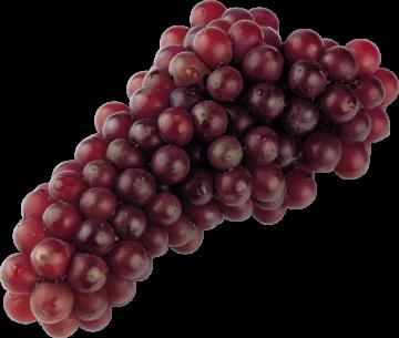 Autocollant Alimentation Fruit Raisins 1