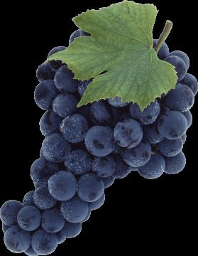 Autocollant Alimentation Fruit Raisins 3