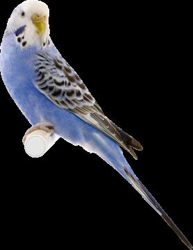 Autocollant Animaux Oiseau 3