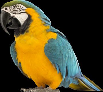 Autocollant Animaux Oiseau Perroquet