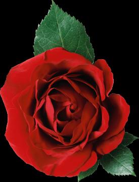 Autocollant Divers Fleur Rose 1