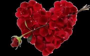 Autocollant Divers Fleur Rose 4