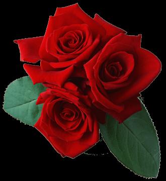 Autocollant Divers Fleur Rose 5