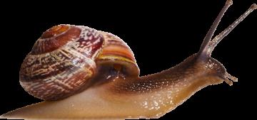 Autocollant Animaux Escargot