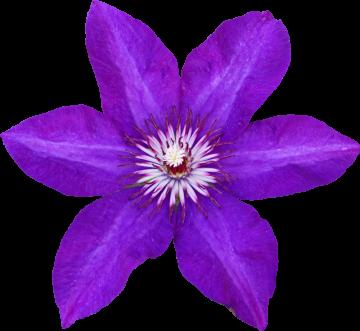 Autocollant Divers Fleur Violette